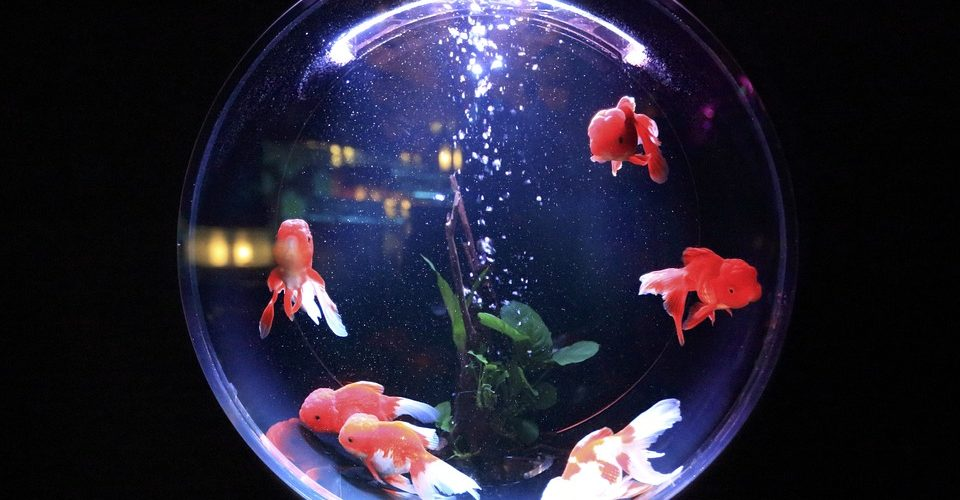 Comment déplacer un aquarium avec des poissons dedans